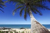 Coconut tree on the beach — Stock Photo