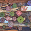 Stock Photo: Variety of colorful sea urchins on twigs and wood
