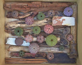 Variety of colorful sea urchins on twigs and wood — Stock Photo