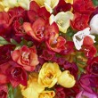 Stock Photo: Variety of colorful freesiflowers closeup