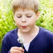 Handsome blond boy blow dandelion — Stockfoto
