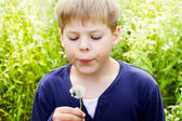 Handsome blond boy blow dandelion — Stock Photo