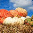 Colorful pumpkins - Stock Photo