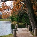 Outono no velho parque — Foto Stock