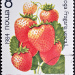 Postage stamp BULGARIA  1984 — Stock Photo