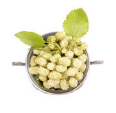 White mulberry — Stock Photo