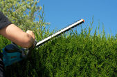 Cut hedge — Stock Photo