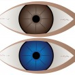 Brown and blue eye — Imagen vectorial