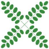 Acacia twigs - star — Stock Vector