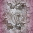 Stock Photo: Texture with roses blossoms