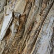 Tree bark texture — Stock Photo #11588474