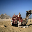 Camel in Cairo. — Stock Photo