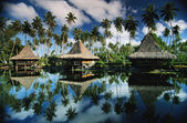 Carribean beauty. — Stock Photo