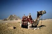 Camel in Cairo. — Stock Photo