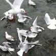Stock Photo: Gulls