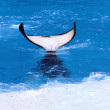Killer whale Tail — Stock Photo