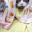 Cat after the hot shower — Stock Photo #11977020