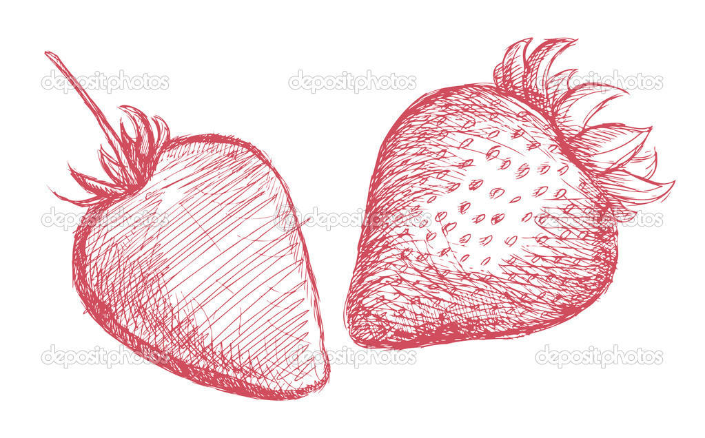 Strawberry pencil sketch vector — ベクター素材ストック #11649720
