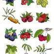 Wild and garden berry vector set — Stock Vector