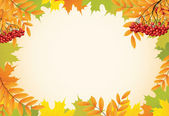 Abstract autumn background with maple leaves and rowanberry vect — Stock Vector