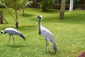 Herons in the park — Stock Photo