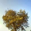 Heart Tree — Stockfoto