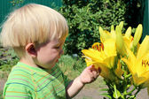 Considers the lilies of the child — Stock Photo