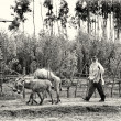Two Ethiopian men follow the loaded donkey, in Ethiopia — Stock Photo