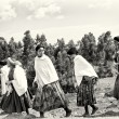 Stock Photo: Group of Ethiopiwomen crosses field