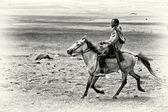 Birr jeździ konno w polu lubelszczyzny — Zdjęcie stockowe