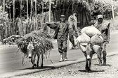 Two Ethiopian men follow the loaded donkey — Stock Photo