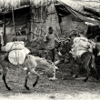 Stock Photo: Ethiopimwith two loaded donkeys