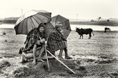 Två etiopiska kvinnor under paraplyer framför korna — Stockfoto