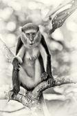 Ganalı bir maymun bir ağaçta oturuyor ve şaşırmış görünüyor — Stok fotoğraf