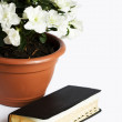 Foto de Stock  : Flower and Holy Book