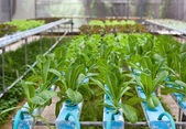 Vegetable house — Stock Photo
