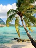 Palm in Moorea — Stock Photo