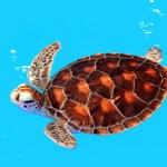 Sea Turtle in Nursery ponds — Stock Photo #11813860