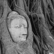 Head of Sandstone Buddha overgrown by Banyan Tree, Ayutthaya historical park, Thailand. After Mega flood in Thailand — Stock Photo