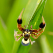Spider on grass — Stock Photo #11815445