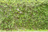 Climing tree wall — Stock Photo
