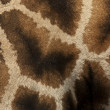 Giraffe — Stock Photo #11821212