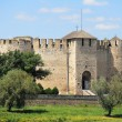 soroca fortress — Stock Photo #11560696