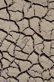Detailed texture background of dried mud clay pattern — Stock Photo