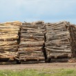 Logs Abound - Lizenzfreies Foto
