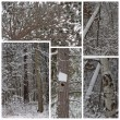 Winter Snow Woods Collage — Stock Photo