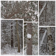 Winter Snow Woods Collage — Stock Photo #11930484