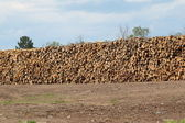Huge stack of logs at the sawmill — Stockfoto