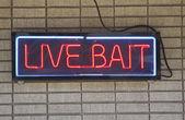 Live Bait — Stock Photo