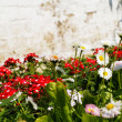 Stock Photo: Flower bed